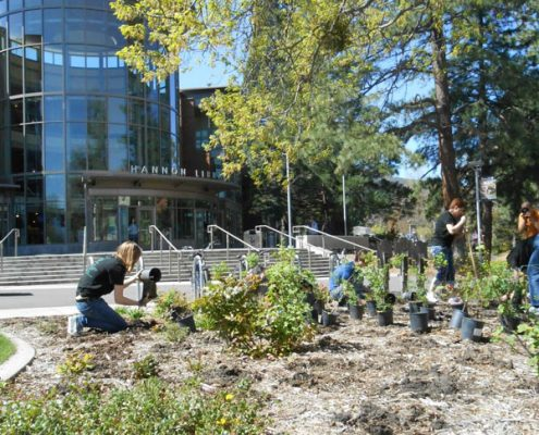 Library Planting